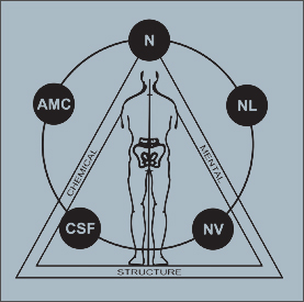 Applied kinesiology (AK). About method.